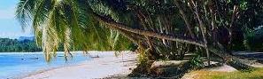 kokos-hain